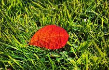 Free Leaf, Grass, Plant, Biome Stock Photo - 112041700