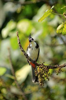 Free Bird, Fauna, Beak, Ecosystem Royalty Free Stock Photo - 112041705