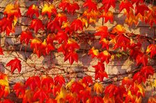 Free Leaf, Autumn, Orange, Deciduous Stock Image - 112042391