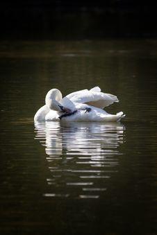 Free Water, Bird, Reflection, Swan Royalty Free Stock Image - 112042846