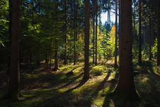 Free Nature, Ecosystem, Forest, Woodland Stock Photography - 112042992