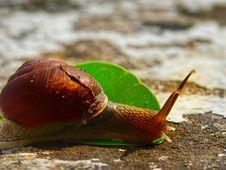 Free Snails And Slugs, Molluscs, Snail, Slug Stock Image - 112043681