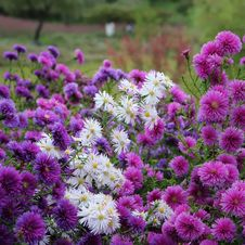 Free Flower, Plant, Aster, Flowering Plant Stock Photo - 112043800