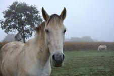 Free Horse, Horse Like Mammal, Pasture, Mane Royalty Free Stock Images - 112044099