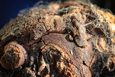 Free Close Up, Organism, Rock, Reptile Royalty Free Stock Photo - 112044175