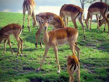 Free Wildlife, Fauna, Ecosystem, Nature Reserve Stock Photography - 112044372