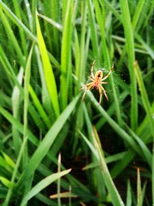 Free Grass, Insect, Invertebrate, Grass Family Royalty Free Stock Photo - 112044705