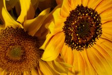 Free Flower, Sunflower, Yellow, Sunflower Seed Stock Images - 112045784