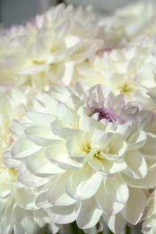 Free Flower, White, Flowering Plant, Floristry Royalty Free Stock Image - 112045876