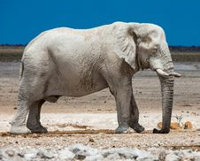 Free Elephant, Elephants And Mammoths, Terrestrial Animal, Indian Elephant Stock Image - 112045931