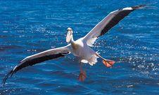 Free Bird, Seabird, Beak, Albatross Royalty Free Stock Photography - 112045937