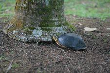 Free Emydidae, Turtle, Tortoise, Grass Stock Photo - 112046110