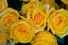 Free Rose, Flower, Yellow, Rose Family Royalty Free Stock Photo - 112046145
