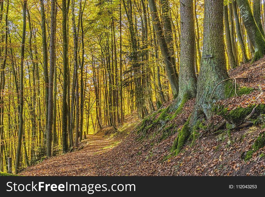 Woodland, Ecosystem, Nature, Forest