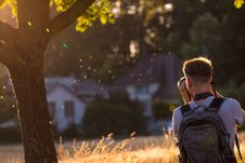 Free Photograph, Nature, Tree, Light Royalty Free Stock Photography - 112056847