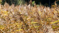 Free Ecosystem, Grass, Grass Family, Plant Stock Photography - 112057152