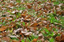 Free Leaf, Deciduous, Grass, Autumn Royalty Free Stock Photography - 112057187