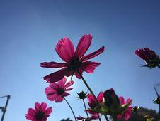 Free Flower, Sky, Pink, Flora Stock Image - 112057561