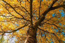 Free Tree, Nature, Branch, Autumn Stock Photo - 112057600
