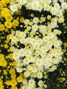 Free Flower, Flowering Plant, Plant, Yellow Royalty Free Stock Photo - 112057855