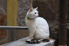 Free Cat, Small To Medium Sized Cats, Fauna, Cat Like Mammal Royalty Free Stock Photos - 112059368