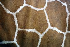 Free Giraffe, Giraffidae, Fauna, Brown Royalty Free Stock Photo - 112059595