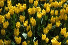 Free Flower, Plant, Yellow, Flowering Plant Royalty Free Stock Images - 112060349