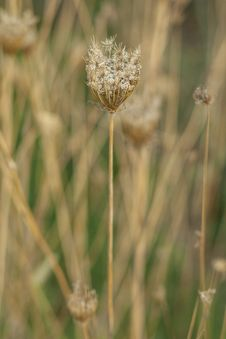Free Flora, Plant, Grass Family, Grass Stock Images - 112060594