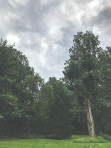 Free Green Trees Under The Cloudy Sky Stock Image - 112089731