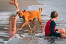 Free Boy Sitting On Seashore Beside Brown Dog At Day Time Royalty Free Stock Photo - 112089755