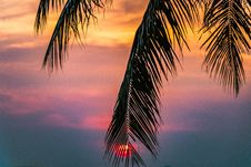 Free Sun Covered With Coconut Tree During Sunrise Stock Image - 112089771