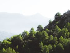 Free Green Pine Trees Near On Rock Formation Stock Photos - 112089853