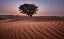 Free Green Tree In The Middle Of Desert Royalty Free Stock Image - 112089866