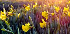 Free Landscape Photography Of Field Covered With Yellow Flowers Stock Photos - 112089883