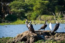 Free Black And White Birds Near Body Of Water At Daytime Royalty Free Stock Image - 112089896
