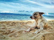 Free Dog Lying On Beach Stock Photo - 112089920