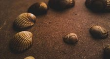 Free Assorted Seashell On Sand Royalty Free Stock Image - 112089986