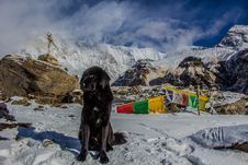 Free Black Dog On Snowy Mountain Stock Images - 112090064
