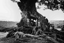 Free Grayscale Photography Of Children Stands Near Tree Stock Photography - 112090072