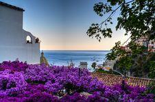 Free Purple Flower Lot Stock Photo - 112090090
