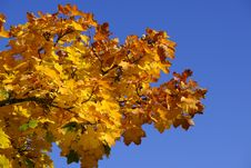 Free Yellow, Tree, Sky, Leaf Stock Photo - 112120440