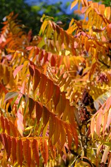 Free Leaf, Autumn, Deciduous, Shrub Stock Photos - 112120443