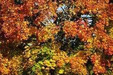 Free Autumn, Leaf, Yellow, Tree Stock Images - 112120454