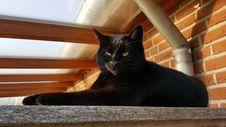 Free Cat, Black Cat, Small To Medium Sized Cats, Cat Like Mammal Royalty Free Stock Photography - 112120587