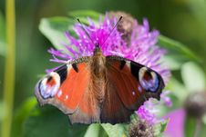 Free Butterfly, Insect, Moths And Butterflies, Brush Footed Butterfly Stock Image - 112120621