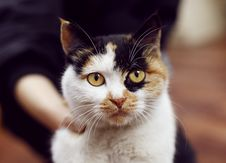 Free Cat, Whiskers, Fauna, Small To Medium Sized Cats Stock Image - 112120671