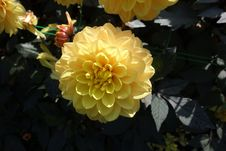 Free Flower, Yellow, Flowering Plant, Plant Stock Photography - 112120672