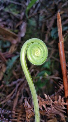 Free Flora, Plant, Fiddlehead Fern, Leaf Stock Photography - 112120792