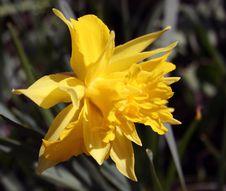Free Flower, Plant, Yellow, Flowering Plant Stock Image - 112120851