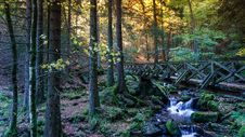 Free Nature, Water, Woodland, Vegetation Stock Photo - 112120880